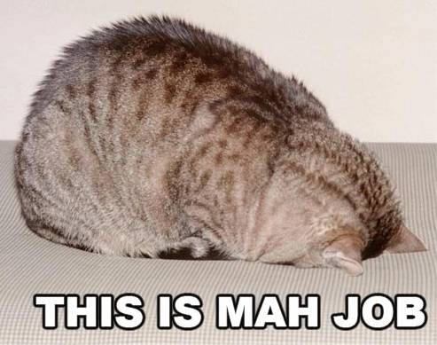 LOLCat This Is Mah Job